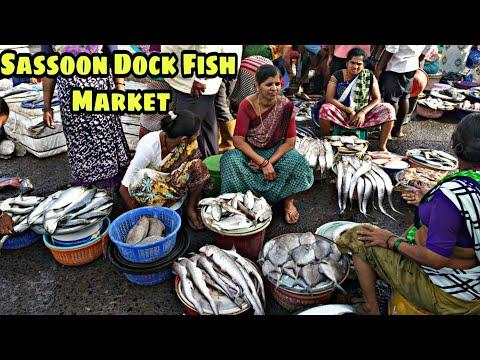Mumbai का सब से पुराना फिश मार्केट |  Ft.saqib Hunerkar Vlogs