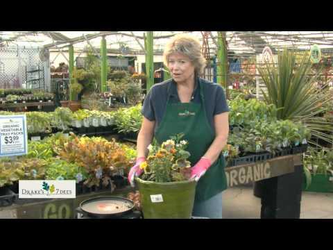 Drake's 7 Dees Garden Treasure Hunt: Color Bowls For Your Garden