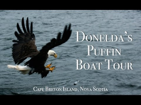 Atlantic Puffins, Eagles, and other Seabirds - Donelda's Puffin Boat Tour - Cape Breton