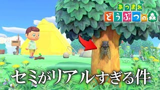 【あつ森】関西人の金もうけ無人島開拓の始まり始まり!! 【あつまれどうぶつの森…