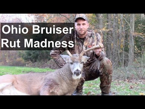 Awesome Bowhunting Ohio Whitetail Deer Rut