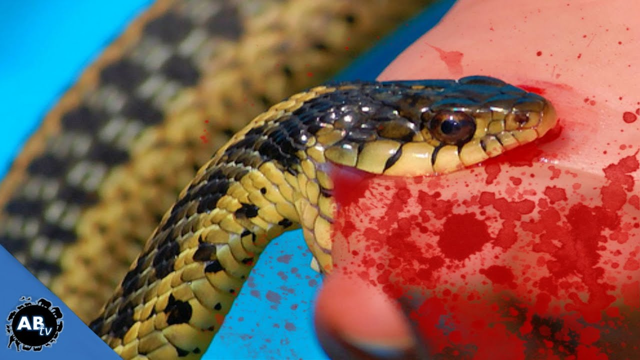 an analysis of the topic of the snake bites Snake bites are a significant  evaluation and management of crotalinae (rattlesnake, water  of poisonous crotalinae (rattlesnake, water moccasin [cottonmouth].