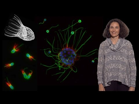 Nicole King (UC Berkeley, HHMI) 1: The origin of animal multicellularity