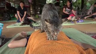 Cat give massage to human