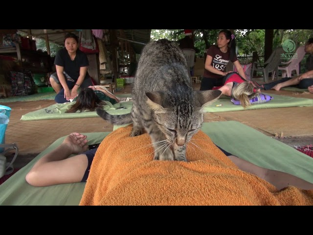 Cat give massage to human