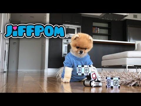 Jiffpom and Cosmo