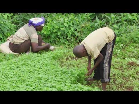 Cameroun, Le maraîchage nourrit les ménages à Yaoundé