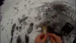 Black Crappie Through The Ice Jigging Northland Forage Minnow