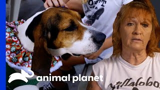 Tia Finds The Perfect Therapy Dog For A Little Girl | Pit Bulls & Parolees