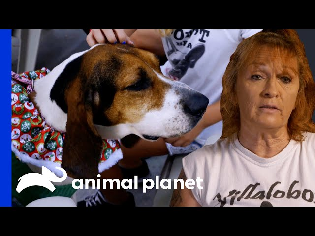 Tia Finds The Perfect Therapy Dog For A Little Girl   Pit Bulls & Parolees