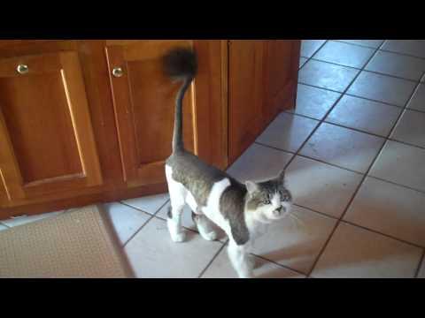 Stupid Cat Haircut