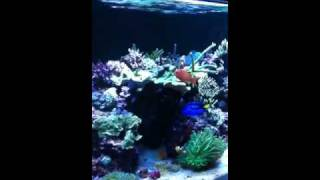 latest video 220 reef