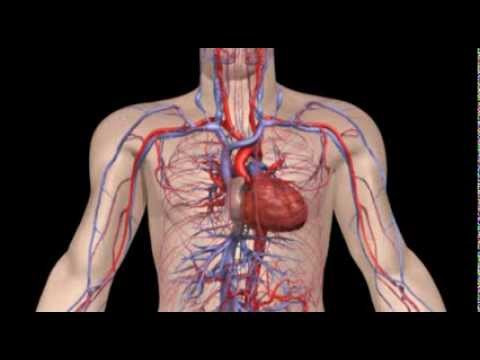 how your heart works This is the american heart association's heathy for good website find healthy living topics like nutrition, physical activity, weight management, stress management, how to quit smoking and sleep better, how to lose weight, lower stress, and much more.