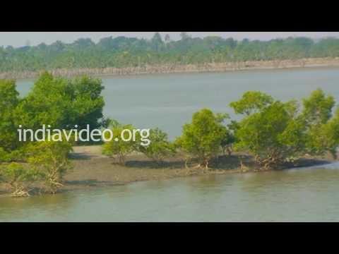Boat Cruise in Brahmaputra river, Sundarbans, West Bengal
