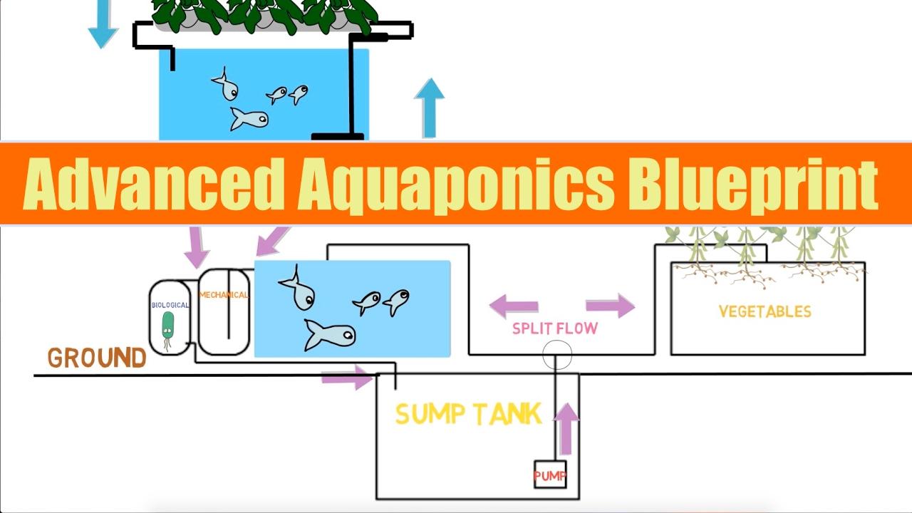 advanced aquaponics blueprint ask the aquaponics god ep23 [ 1280 x 720 Pixel ]