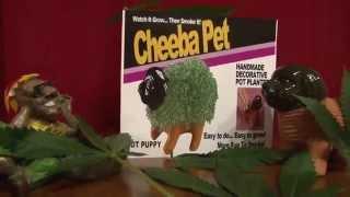 Chia Pet Spoof