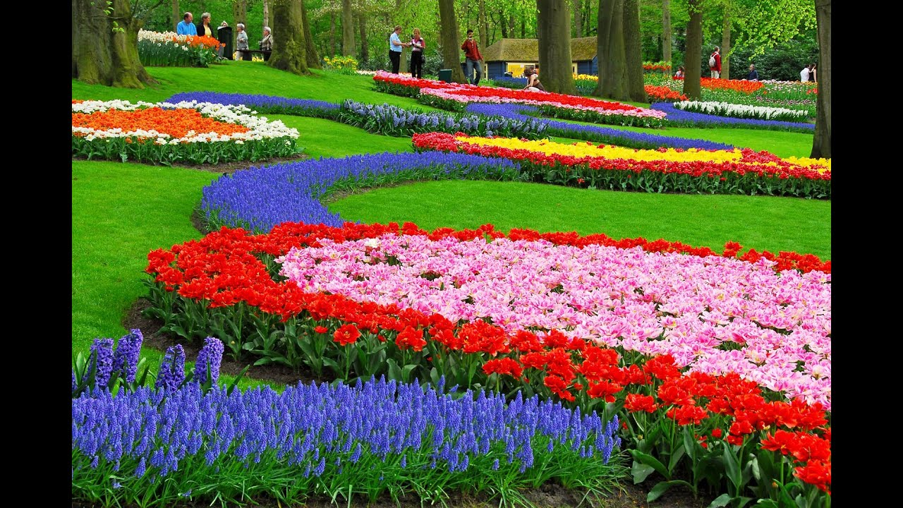 walking in a fantastic tulips garden keukenhof in holland - youtube