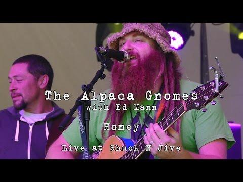 The Alpaca Gnomes w/Ed Mann: Honey [4K] 2015-10-10 - Shuck N Jive