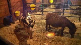 Donkey Barn Cam 01-21-2018 00:11:57 - 01:11:59 thumbnail