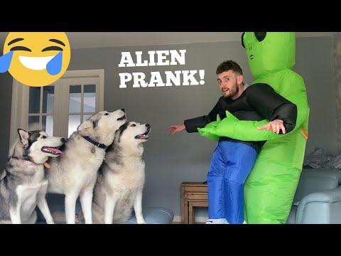 Pranking My Huskies With Alien Invasion! [HILARIOUS REACTION] [PRANK]