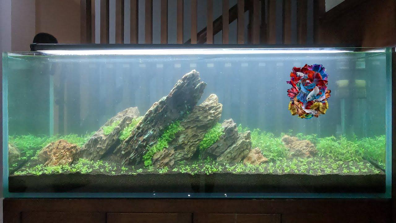 How To Make a Giant Nature Aquarium 2000 mm | DIY Aquascape At Home Ideas | Home Decor