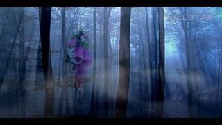 Vangelis:  Dream in an Open Place - Álom a természet ölén ( HD )