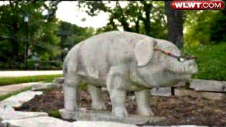 'big Pig' Statue Disappears From Family's Yard