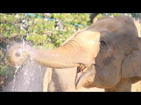 Japanese Folk Song #44: Little Elephant/Horses (ぞうさん・おうま Zōsan/Ouma)