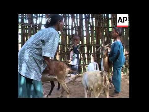 Goats given as presents from western nations empowering African women