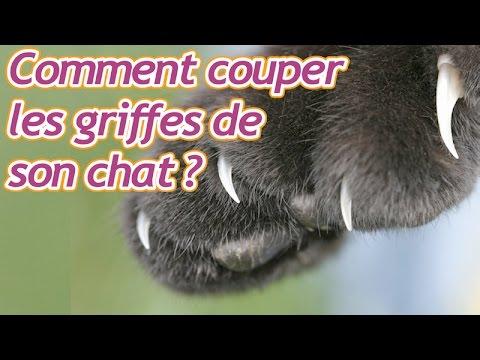 Comment Couper Les Griffes De Son Chat ?