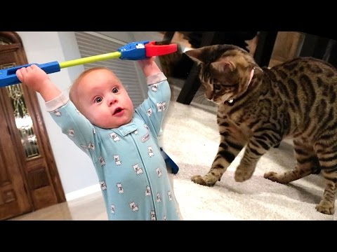 BABY VS. KITTEN!