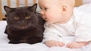 What Happens When Babies Talk To Cats?
