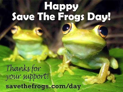 A Brief History Of Save The Frogs Day