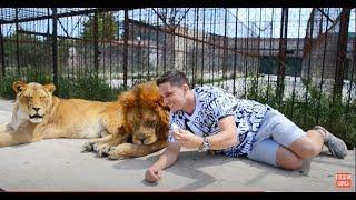Блогеры подъехали к первым львам ! Никто не выходит из машинки !