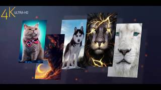 Animals Backgrounds Hd & 4k Wallpapers