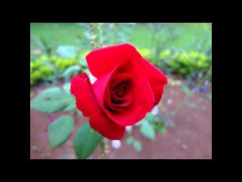 flor hermosa los ramones de nuevo leon youtube