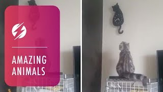 Adorable Kitty Moves Tail Along With Cat Clock