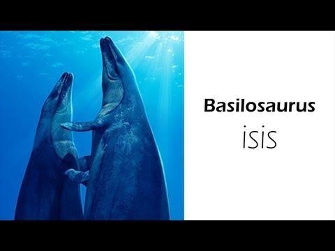 Basilosaurus isis - Whale Evolution