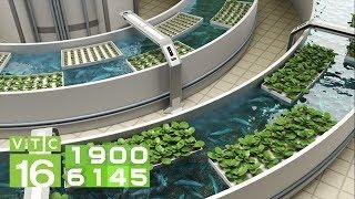 Gambar cover Trồng rau thủy canh kết hợp nuôi cá Aquaponics | VTC16