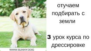 Отучаем собаку подбирать с земли. Урок 3- курс по дрессировке.