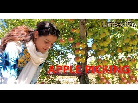 apple-picking---kids-fun---life-with-nisa-vlog