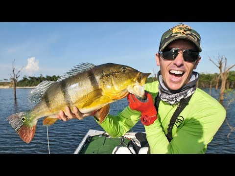 Fishing Peacock Bass In The Amazon Pt.1 | AWESOME Topwater Strikes!