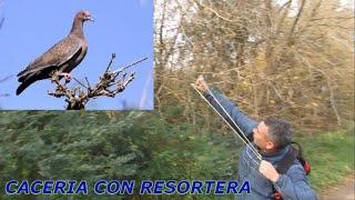 RECORDANDO VIEJOS TIEMPOS!!!CACERIA DE CUISES Y PALOMA CON GOMERA....