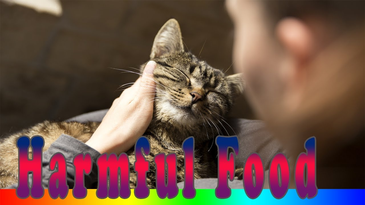 Foods Cats Can't Eat - Top 8 Foods That Are Bad For Your Cat
