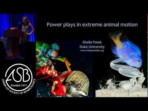 Patek - Power plays in extreme animal motion