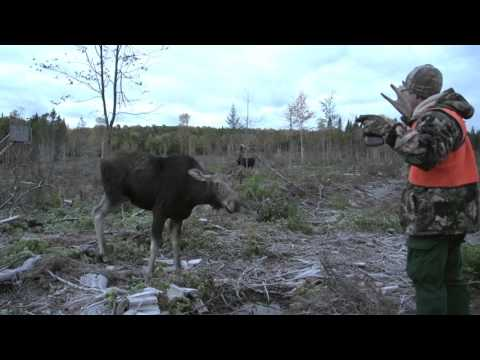 Quebec Outfitter's Camp - Lord Of The Woodlands