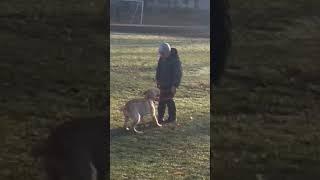 Вот какие папы водят детей в школу,ударил собаку которая подошла его  понюхать,у сабаки ушиб носа