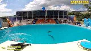 """Театр морских животных """"Акватория"""" (Ялта): великолепная пятерка черноморских дельфинов"""