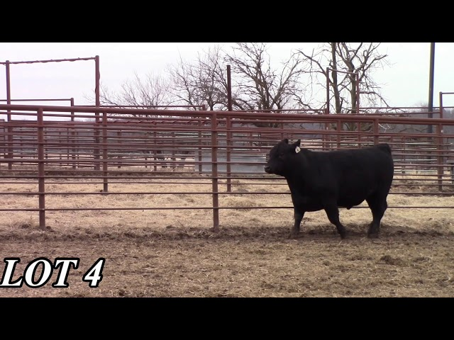 Mead Angus Farms Lot 4