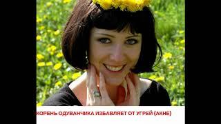 Чай из одуванчика - Домашний Лекарь - выпуск №2